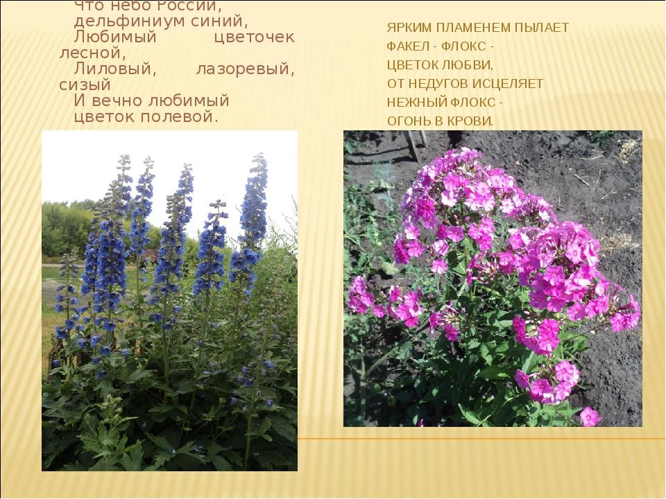 Что небо России, дельфиниум синий, Любимый цветочек лесной, Лиловый, лазоревы...