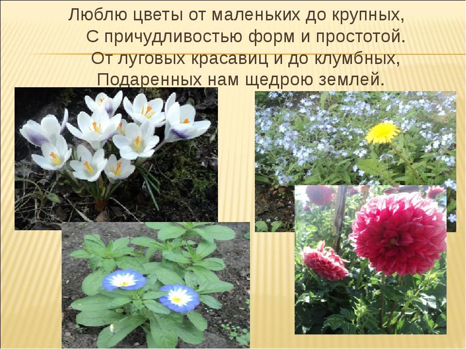 Люблю цветы от маленьких до крупных, С причудливостью форм и простотой. От лу...