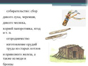 собирательство: сбор дикого лука, черемши, дикого чеснока, корней папоротника