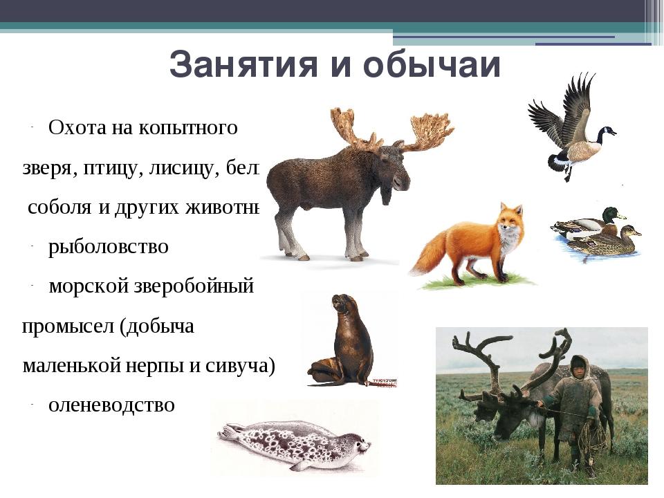 Занятия и обычаи Охота на копытного зверя, птицу, лисицу, белку, соболя и дру...