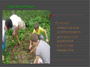 Заключение: В почве имеются все необходимые для роста и развития растений вещ