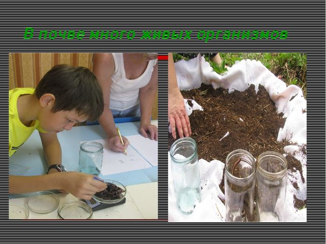 В почве много живых организмов