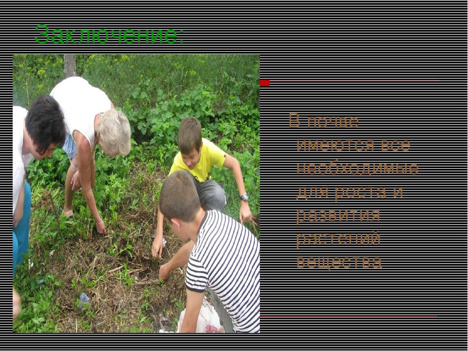 Заключение: В почве имеются все необходимые для роста и развития растений вещ...