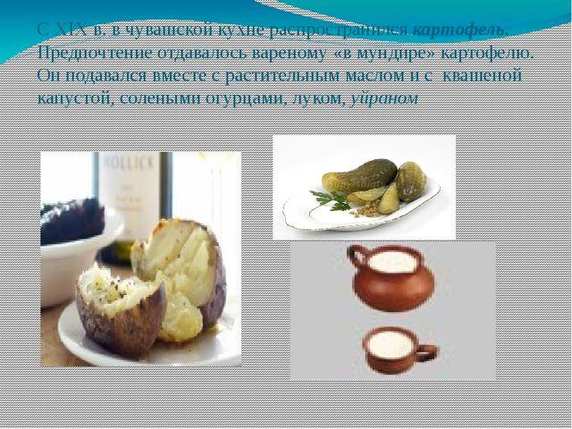 С ХІХ в. в чувашской кухне распространился картофель. Предпочтение отдавалось...