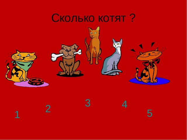 Сколько котят ? 1 2 3 4 5