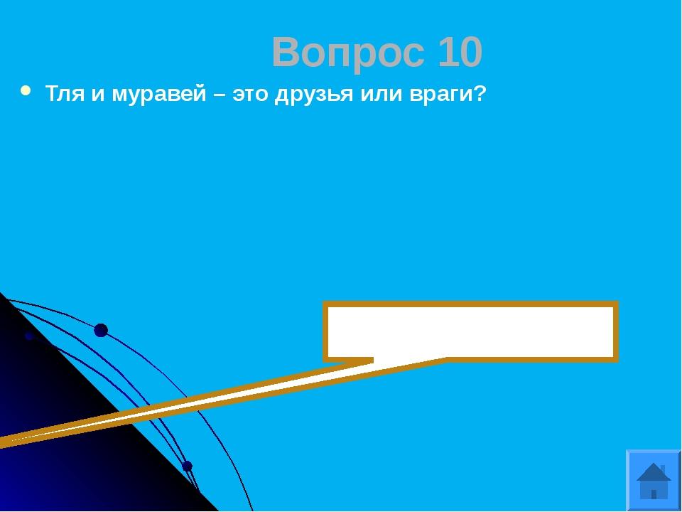 Вопрос 12 Длина экватора? 40000км.