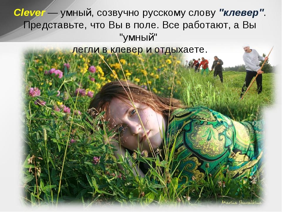 """Clever— умный, созвучно русскому слову """"клевер"""". Представьте, что Вы в поле...."""