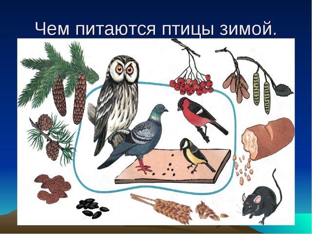 Чем питаются птицы зимой.