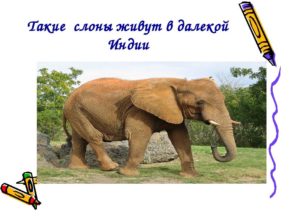 Такие слоны живут в далекой Индии
