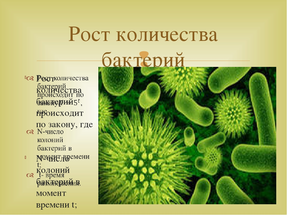 Рост количества бактерий 