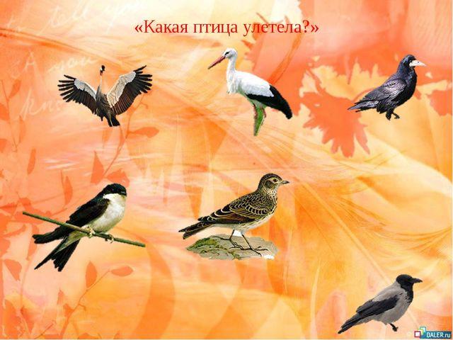 «Какая птица улетела?»