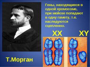 Т.Морган Гены, находящиеся в одной хромосоме, при мейозе попадают в одну гаме