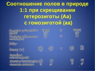 Соотношение полов в природе 1:1 при скрещивании гетерозиготы (Аа) с гомозигот