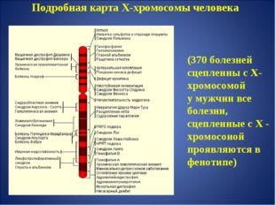 Подробная карта Х-хромосомы человека (370 болезней сцепленны с Х-хромосомой у