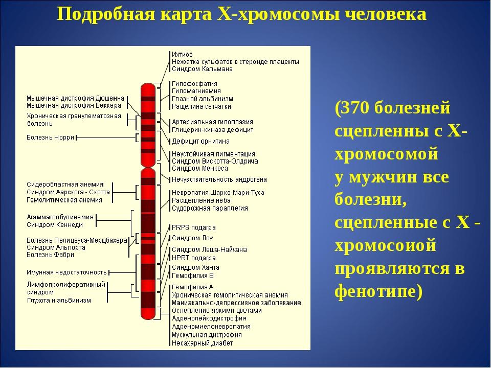 Подробная карта Х-хромосомы человека (370 болезней сцепленны с Х-хромосомой у...