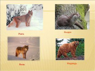 Рысь Волк Выдра Медведь