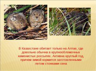 В Казахстане обитает только на Алтае, где довольно обычна в крупнообломочных