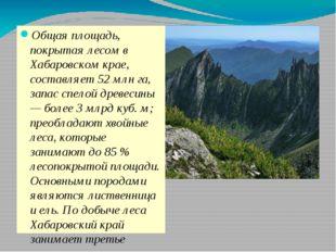 Общая площадь, покрытая лесом в Хабаровском крае, составляет 52 млн га, запа