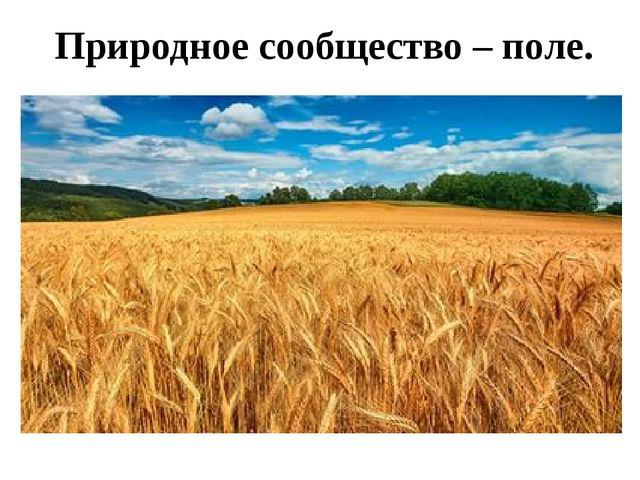 Природное сообщество – поле.
