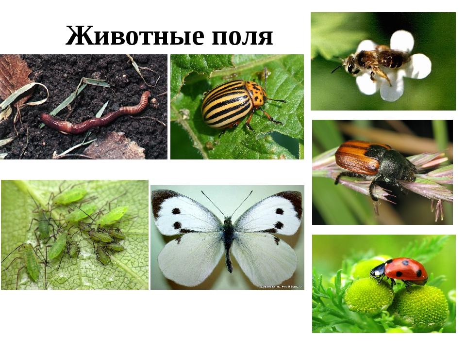Животные поля