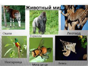 Животный мир Окапи Горилла Леопард Нектарница Летяга Муха це-це
