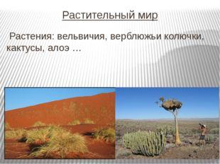 Растительный мир Растения: вельвичия, верблюжьи колючки, кактусы, алоэ …