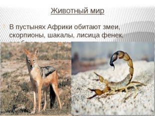 Животный мир В пустынях Африки обитают змеи, скорпионы, шакалы, лисица фенек,