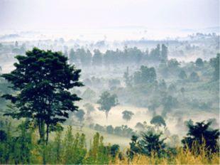 «В этих лесах то тут, то там растут деревья – гиганты. Их стволы так толсты,