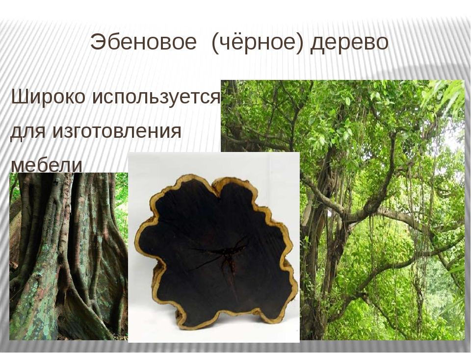 Эбеновое (чёрное) дерево Широко используется для изготовления мебели