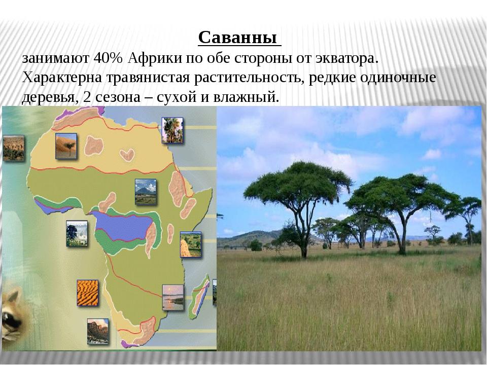 Саванны занимают 40% Африки по обе стороны от экватора. Характерна травяниста...