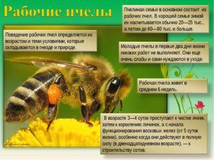 http://fermer02.ru/honey/