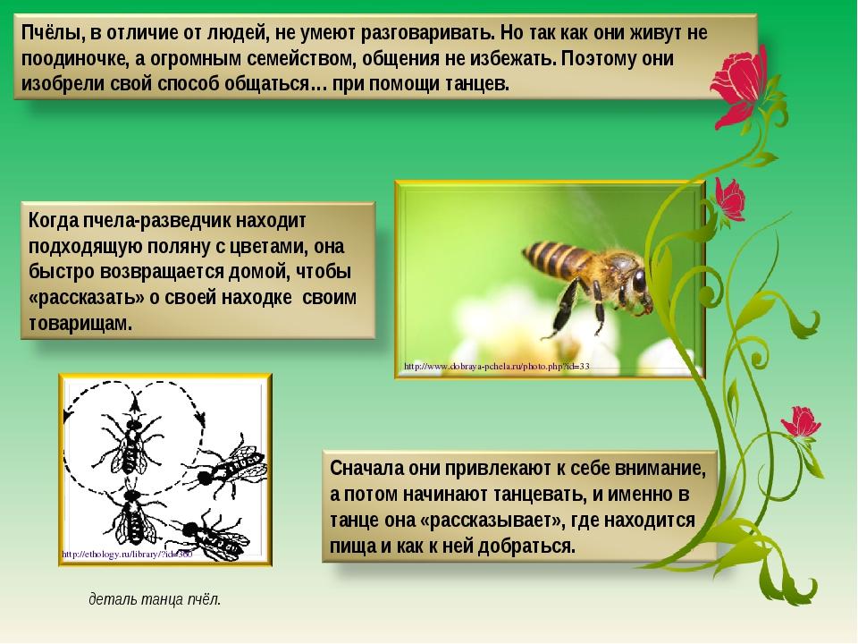 деталь танца пчёл. http://ethology.ru/library/?id=360 http://www.dobraya-pche...