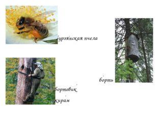 бурзянская пчела борть кирам бортевик ∙ ∙ ∙ ∙