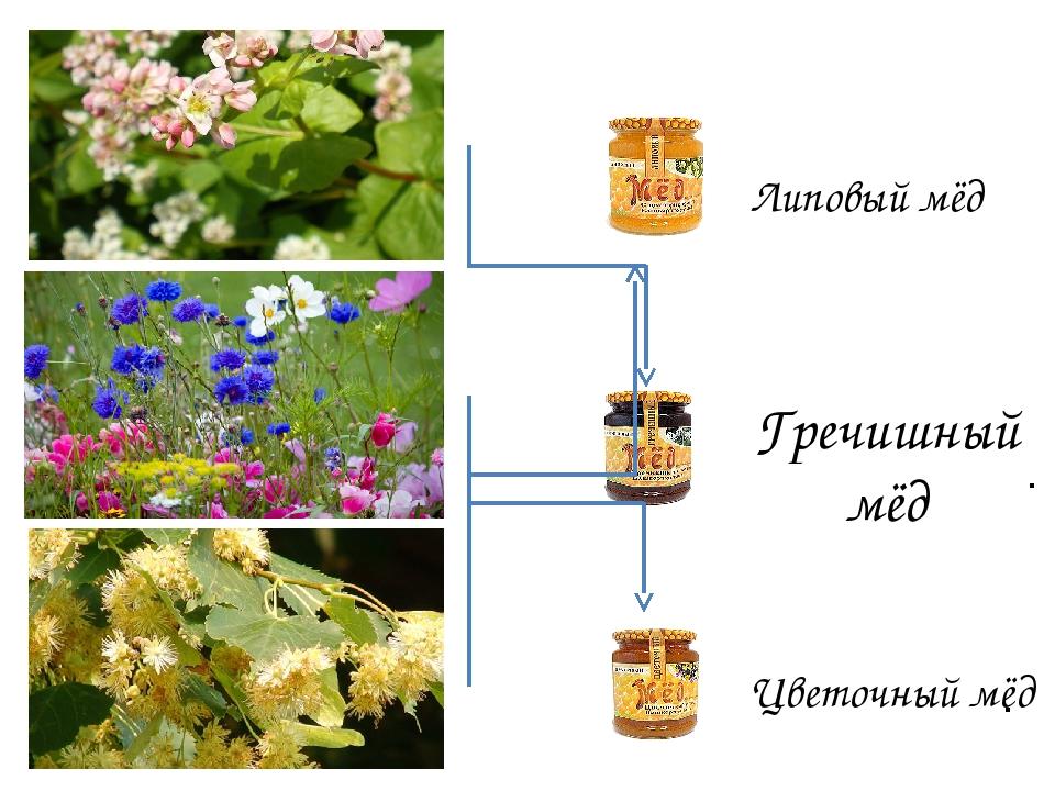 . . Липовый мёд Гречишный мёд Цветочный мёд
