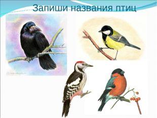 Запиши названия птиц