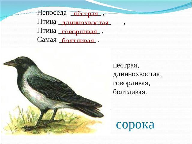 Непоседа ________ , Птица ______________ , Птица ___________ , Самая ________...