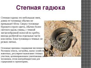 Степная гадюка Степная гадюка это небольшая змея, длина ее туловища обычно не