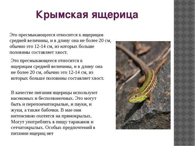 Крымская ящерица Это пресмыкающееся относится к ящерицам средней величины, и...