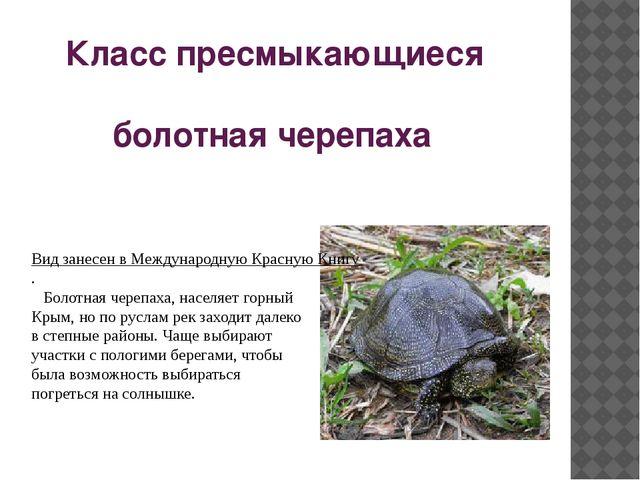 Класс пресмыкающиеся болотная черепаха Вид занесен в Международную Красную К...