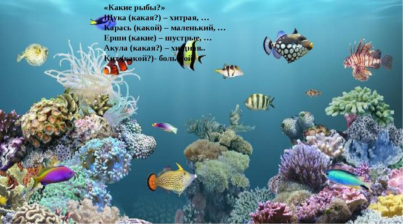 «Какие рыбы?» Щука (какая?) – хитрая, … Карась (какой) – маленький, … Ерши (к...
