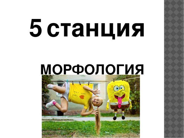 5 станция МОРФОЛОГИЯ