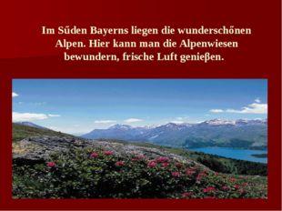 Im Sűden Bayerns liegen die wunderschőnen Alpen. Hier kann man die Alpenwiese