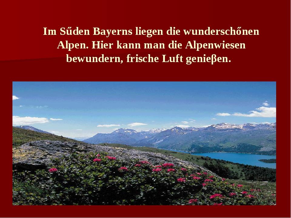 Im Sűden Bayerns liegen die wunderschőnen Alpen. Hier kann man die Alpenwiese...