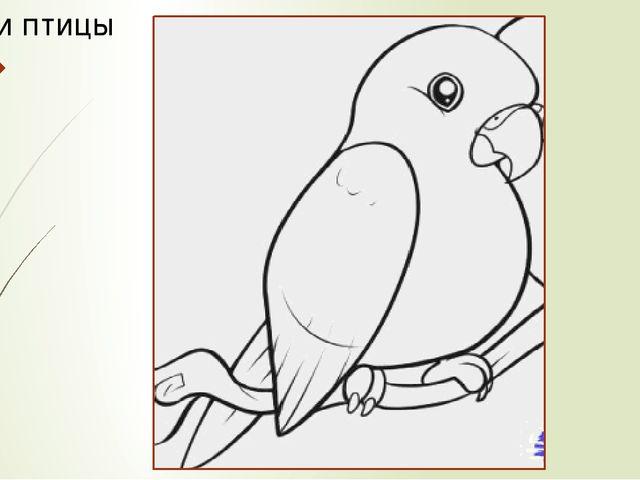 Части птицы
