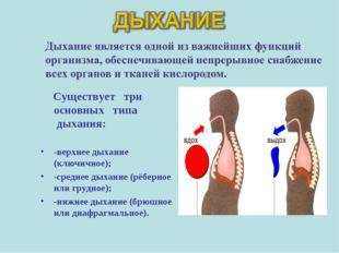 Существует три основных типа дыхания: -верхнее дыхание (ключичное); -среднее