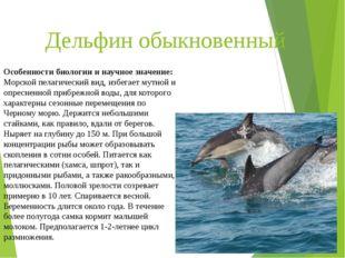 Дельфин обыкновенный Особенности биологии и научное значение: Морской пелагич