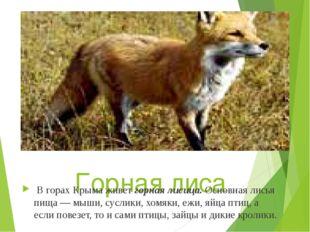 Горная лиса В горах Крыма живетгорная лисица. Основная лисья пища — мыши, су