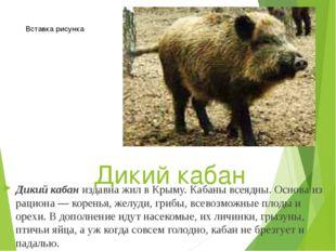 Дикий кабан Дикий кабаниздавна жил в Крыму. Кабаны всеядны. Основа из рацион