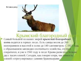 Крымский благородный олень. Самый большой из наших зверейкрымский благородны