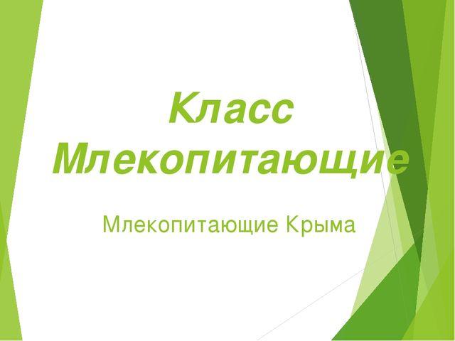 Класс Млекопитающие Млекопитающие Крыма